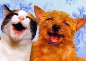 Amigos gato y perro